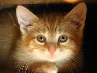 orange-kittens-12.jpg